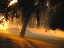 日出的公园 免版税库存照片