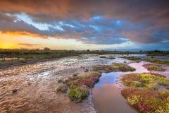 日出的出海口沼泽地 免版税库存照片