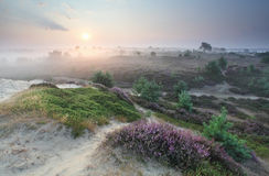 日出的开花的夏天草甸 图库摄影