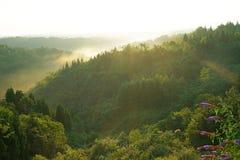 日出的有薄雾的森林 免版税库存照片