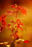日出的植物在一个夏天早晨 免版税图库摄影