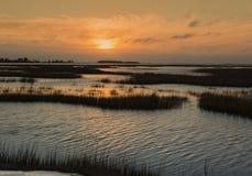 日出的沼泽 库存图片