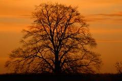 日出结构树冬天 免版税库存照片