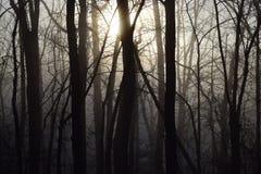 日出通过一个有雾和黑暗的森林 免版税图库摄影