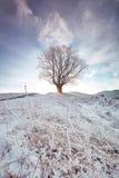 日出通过冬天橡木分支发光 免版税库存图片