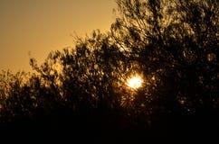 日出通过分支 库存照片