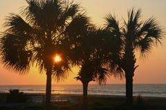 日出通过棕榈树 免版税库存图片