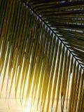 日出通过椰子树 免版税库存照片