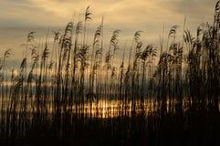 日出通过海滩草 免版税库存图片