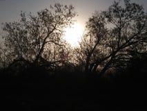 日出通过结构树 免版税库存图片