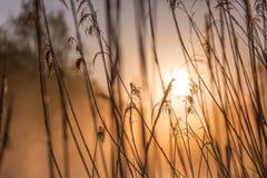 日出通过高野草在有薄雾的早晨在春天 免版税库存照片
