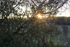 日出通过结构树 库存照片