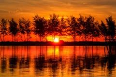 日出,水,天空,树,光, 免版税库存图片