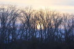 日出 吐拉河的左岸 秋明州 俄语西伯利亚 免版税图库摄影