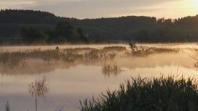 日出 雾房子横向早晨剪影结构树 在天空的早晨和它的河的含水表面上的反射 抽象早晨自然夏天墙纸 股票录像