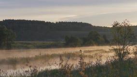 日出 雾房子横向早晨剪影结构树 在天空的早晨和它的河的含水表面上的反射 抽象早晨自然夏天墙纸 股票视频