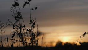 日出 雾房子横向早晨剪影结构树 在天空的早晨 抽象早晨自然夏天墙纸 草开花以为背景的 影视素材