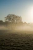 日出阴霾公园 库存照片