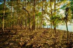 日出-黎明,湖,黎明,太阳,河岸 免版税库存照片