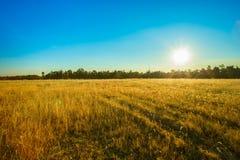 日出-黎明,领域,太阳,农场,天空 库存照片