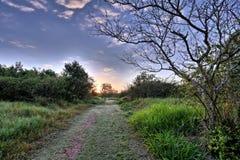 日出pantanal 免版税库存照片