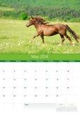 日历2014年。马。5月 图库摄影