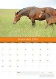 日历2014年。马。9月 图库摄影