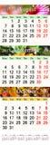 日历8月用不同的色的图象的2017年10月 库存照片