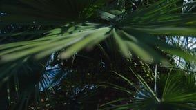 日叶子被采取的掌上型计算机晴朗 慢的行动 影视素材