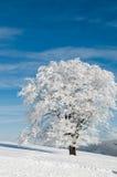 日多雪的晴朗的结构树 库存图片