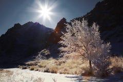 日多雪的晴朗的结构树 免版税库存图片