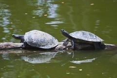 日志乌龟 库存图片