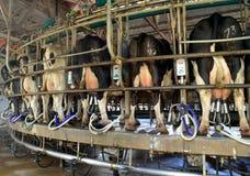 日志产业-母牛挤奶设备 免版税库存图片