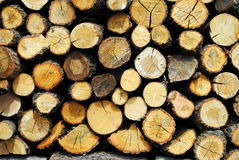 日志分裂了木的树干 库存照片