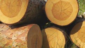 日志和木材 影视素材