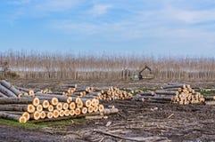 日志和柴堆的起重机 免版税库存图片