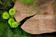 日志和绿色叶子 免版税图库摄影