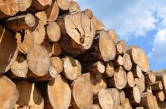 日志堆木 库存图片