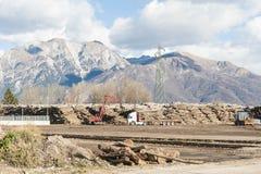 日志存贮的木产业 库存照片