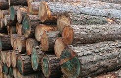 日志木材木头 免版税库存照片