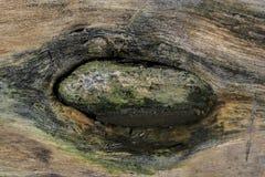 日志纹理的眼睛特写镜头 库存照片