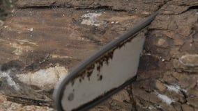 日志记录器与锯的击倒的树 慢的行动 影视素材