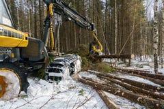 日志记录器的图象在冬天森林里砍了树 免版税库存照片