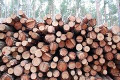 日志记录的堆杉木 图库摄影
