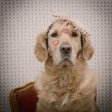 日愉快的s华伦泰 一条狗的画象与唇膏亲吻的 v 免版税库存照片