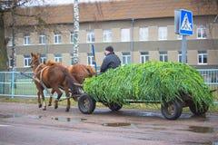 日托米尔,乌克兰- 2014年10月10日:在街道的马和支架乘驾 库存图片