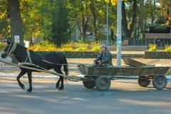 日托米尔,乌克兰- 2014年10月10日:在街道的马和支架乘驾 免版税库存图片