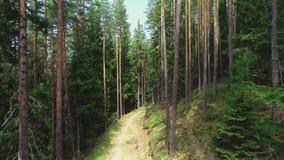 日晴朗森林的横向 在树之间的方式 空中录影 影视素材
