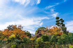日晴朗森林的横向 大厦的看法在森林中的在箱根,日本 复制文本的空间 图库摄影