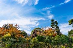 日晴朗森林的横向 大厦的看法在森林中的在箱根,日本 复制文本的空间 库存照片